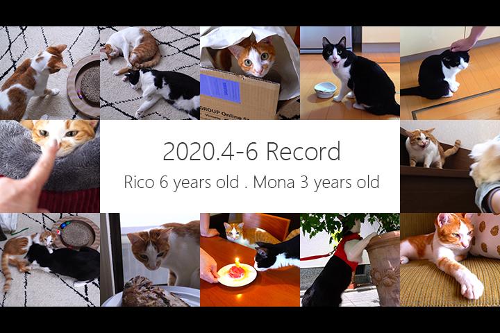 3ヶ月に1度の かわいい 猫動画まとめ