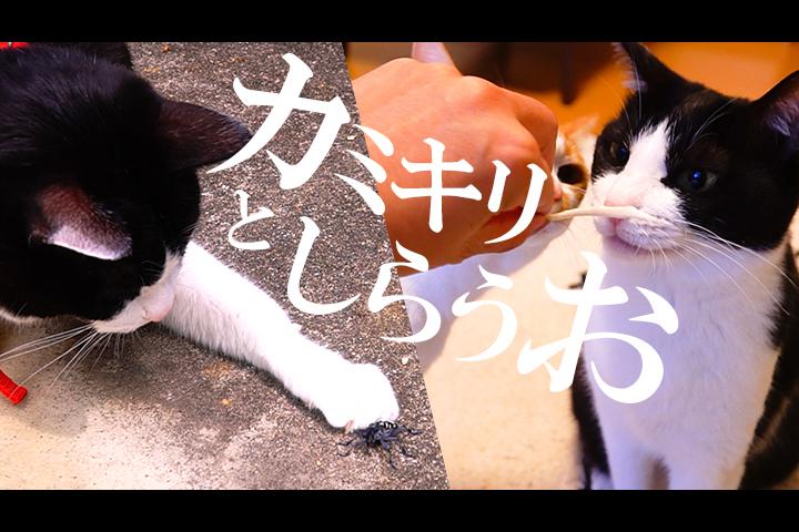 猫散歩 で ゴマダラカミキリ に出会う