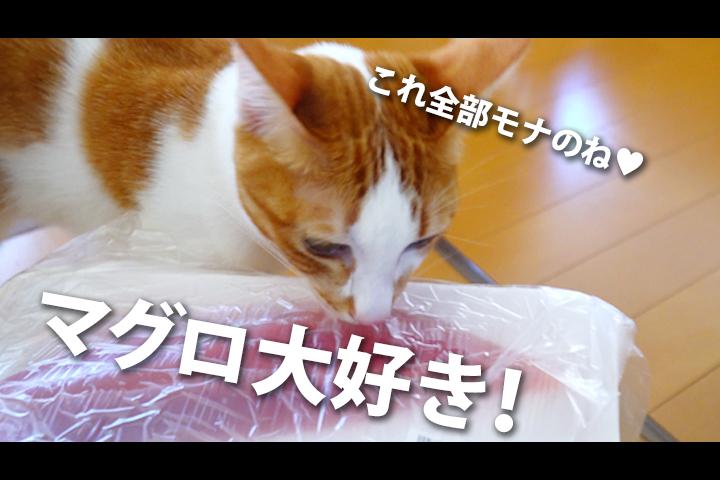 マグロ 大好き うちの猫