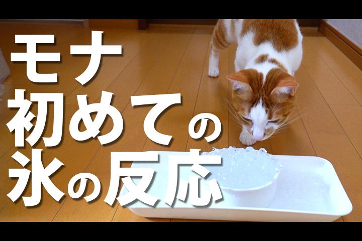 初めて 氷をなめた 猫の反応 って?