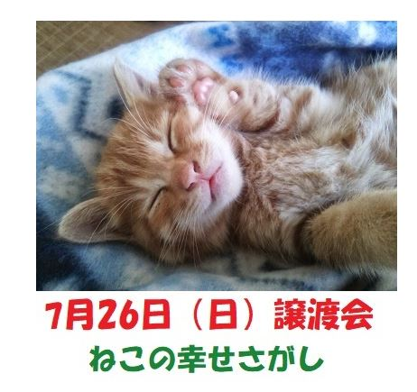7月26日 ねこの幸せさがし 保護猫 譲渡会