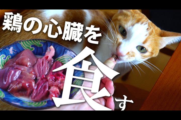 うち猫 、初めて 鶏の心臓 ( ハツ ) を 食べる !