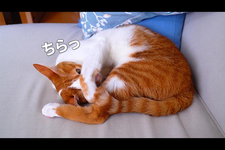 ただ、猫が寝てるだけ…