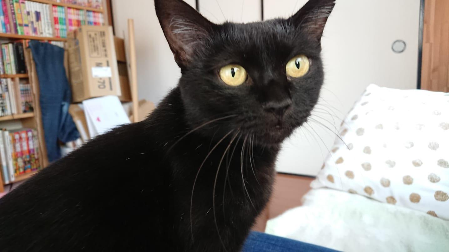 10/25 保護猫 ボランティア「ねこの幸せさがし」 譲渡会 参加します!