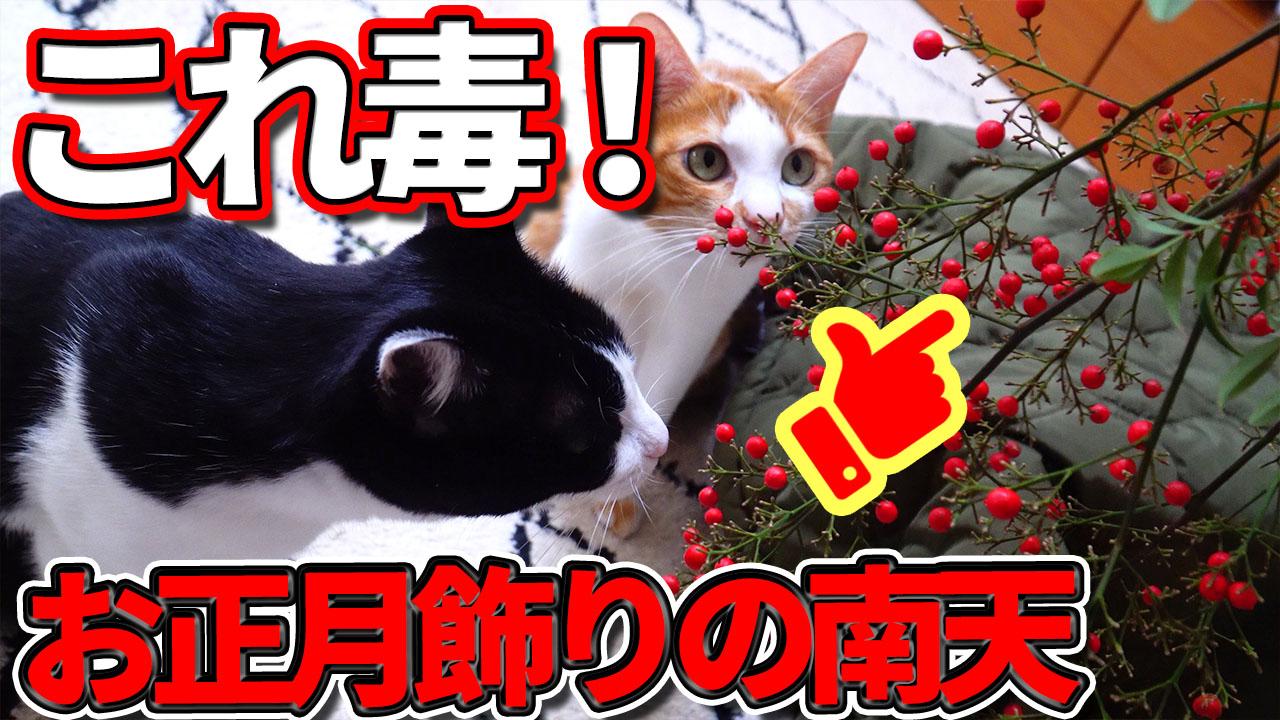 人間にいい物が猫にもいいとは限らない!この植物危険!取り扱い注意!!!