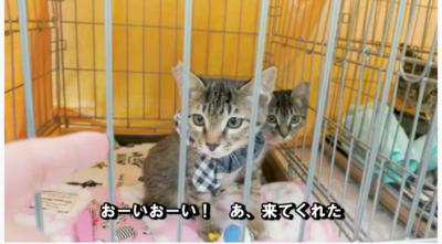 堺東「ねころ部」保護猫譲渡会 2月21日開催