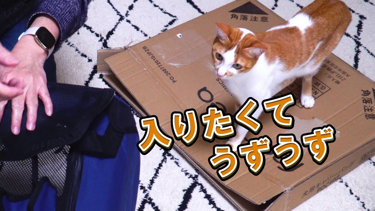 猫が2匹入るキャリーバックを購入しました!