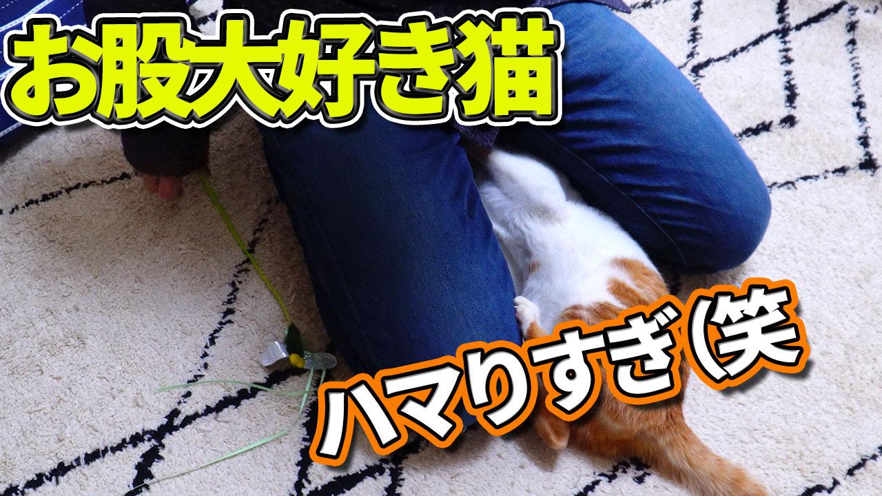猫が大好きなオモチャはコレ!