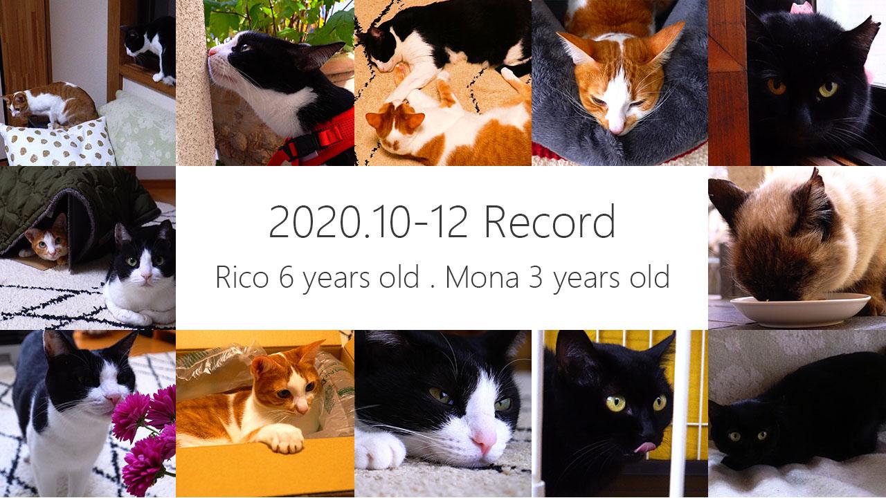 2020 10月〜12月 猫動画まとめ